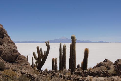 Ein Höhepunkt: Die Insel Incahuasi während der Überquerung des Salzsees
