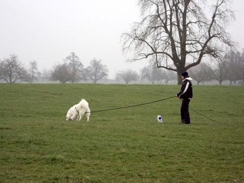 Duke und ich an einer Fährtenhunde-Prüfung 2011.