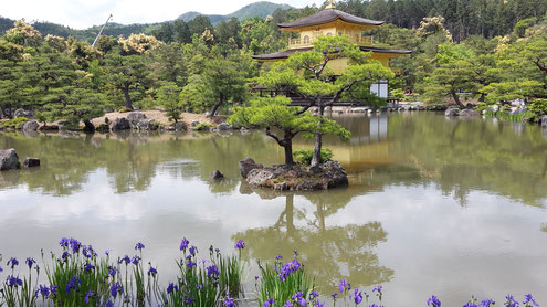 Japanischen Tempel mit Teich, Kiefern und Wasserlilien (Foto D. Mohr)
