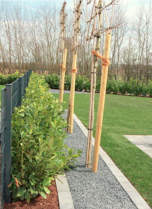baum und pflanzenpflege garten landschaftsbau m nster. Black Bedroom Furniture Sets. Home Design Ideas