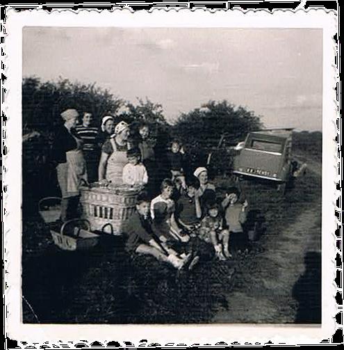 La famille Collin réunit au moment des vendanges en 1959. C'est la pause au pied des vignes avec les paniers en bois et en osier.