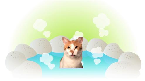 水系設備の話なので弊猫を温泉