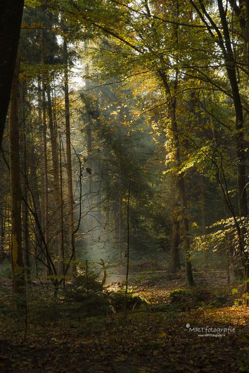 Zonneharpen in het bos Den Treek, Leusden