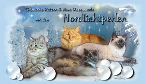 Cattery von den Nordlichtperlen
