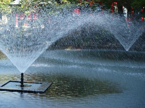 7月31日(2016) 2つの噴水:7月29日、井の頭公園の弁財天の近くで。