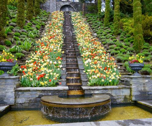 Gartenreise Deutschland:Insel Mainau und die Blumentreppe