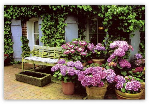 Hortensien-Orgien vorm Haus
