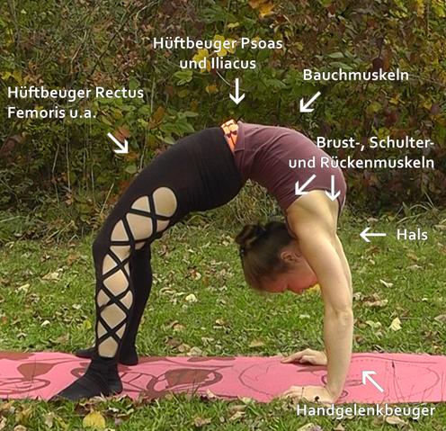 Flexibility-Kurs in Augsburg