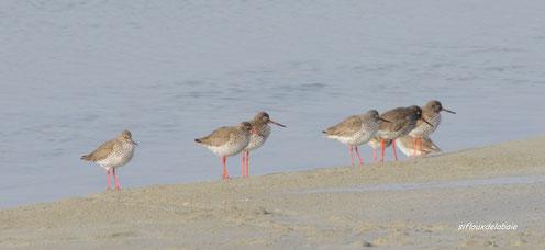 sorties oiseaux de la baie de somme
