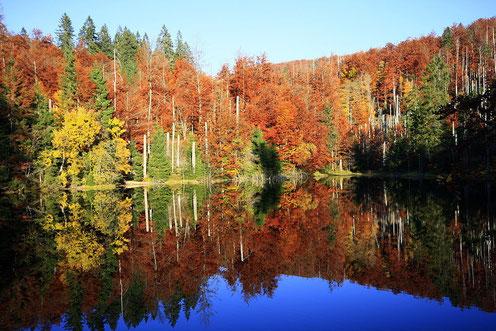 Herbstlicher Farbenzauber Bayerischer Wald