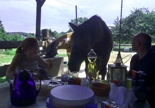 Kaffeekränzchen mit Pferd ;-)