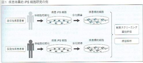 疾患特異的iPS細胞研究の例