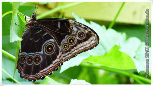 Schmetterlingspark, Fehmarn