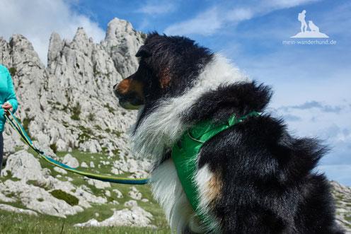 Halsband oder Hundegeschirr mein wanderhund