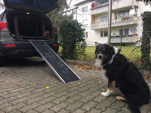 Hunderampe; Rampe für Hund;