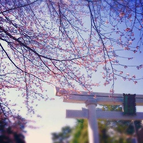 2016.4.1 尾山神社の桜