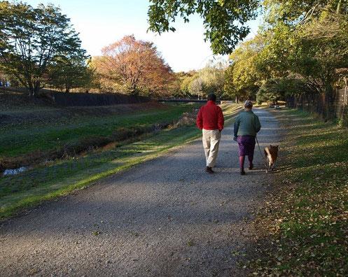 12月19日(2012) 散歩の風景1(犬とお散歩:野川遊歩道)