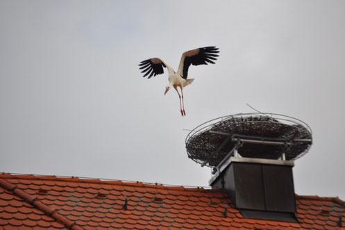 © Karl-Michael Günsche, Storch in Haag