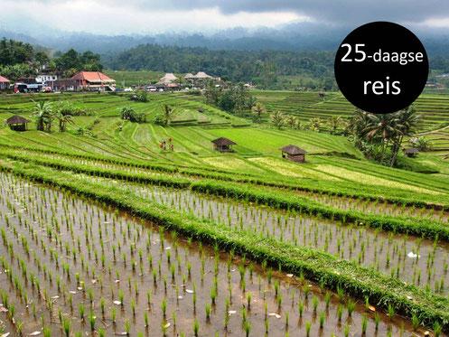 Rijstvelden van Jatiluwih op Bali