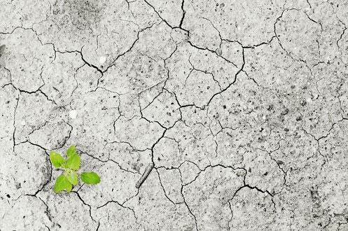 Dürre Wassermangel Trocken