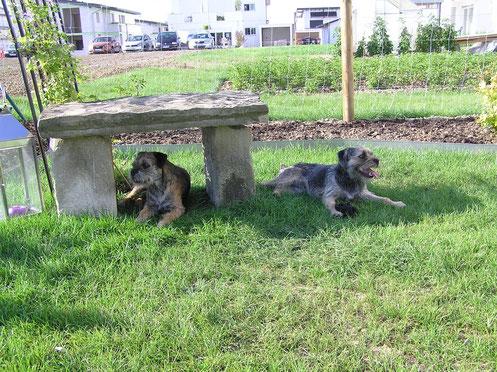 Anouk's und Neles Lieblingsplatz im Garten