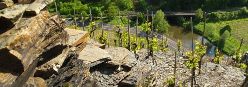 Steile Weinberge mit Schieferboden an der Ahr speichern die Wärme der Sonne.