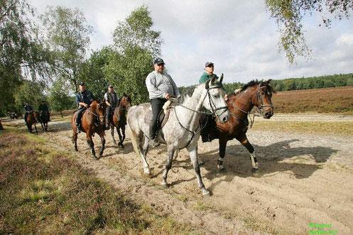 Bild: In der Lüneburger Heide gibt es zahlreiche Reitwege, ideal für traumhafte Ausritte