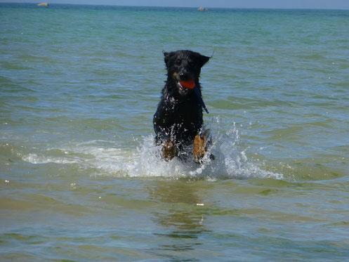 Im Urlaub 2013 in der Normandie (F) entwickelt Moritz sich zur Wasserratte.
