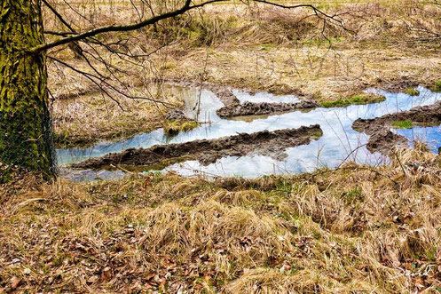 Biber und Totholz: Diese Wasserstraßen dienen als Transportwege