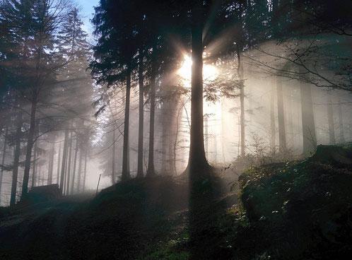 Bild: eigene Bildaufnahme im bayerischen Wald auf dem Berg Rusel Hausstein nicht weit von unserem Geschäftssitz in Deggendorf, Niederbayern, Deutschland