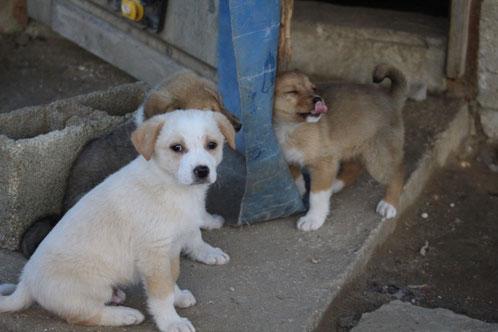 Diese süßen Hundewelpen sind auch noch alle auf der Suche nach ihren Menschen!