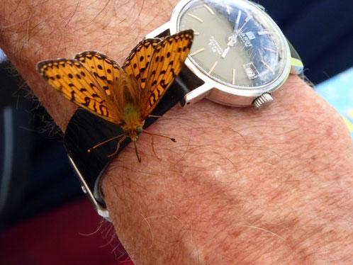 In Kärnten erkundigen sich selbst Schmetterlinge nach der Uhrzeit