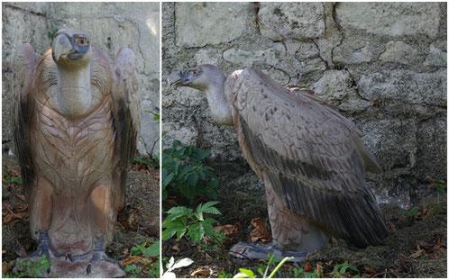 vautour nat foarm