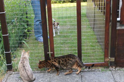 Hier sehe ich zum ersten Mal meine Katzenkumpel Merlin(braun) und Mohan(hell)