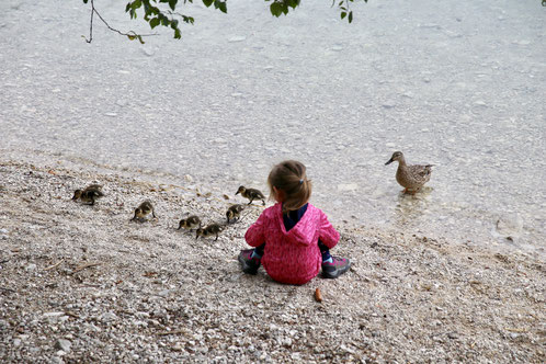 Entenbabys am Eibsee