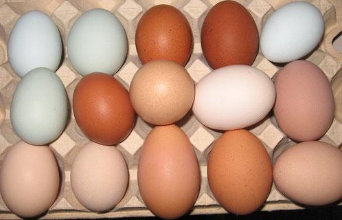 Eier in verschiedenen Größen, Formen und Farben