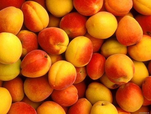 районированные абрикосы в клину
