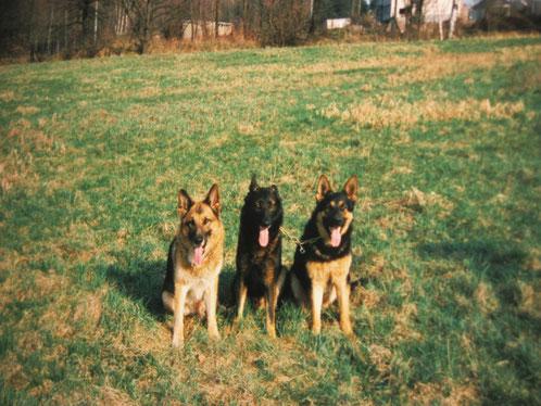 """Kay """"Kerry"""" vom Lichtungsweg, Vito """"Felix"""" vom Ritterland und Baxter von der Eichholzbahn"""