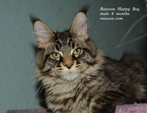 Rascoon Happy Boy