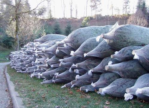 Großhandel Weihnachtsbäume, Christbäume, Tannenbäume vom Schwarzwaldhof Hölzleberg, Josef Gmeiner in Durbach - https://www.hoelzleberg.de