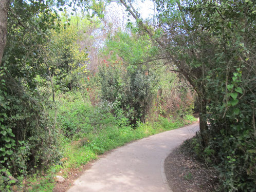 Quite and comfortable paths in Tel Dan National park