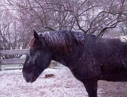 Mein Schneepferdchen mit Wintermähne :-)