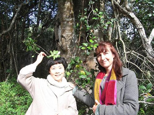 アフリカンツリーミスト 太古の森プラットボス