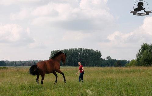 kreative Bodenarbeit, Angst, Pferd, Desensibilisierung, Natural Horsemanship, Freiarbeit, Spaß mit Pferden, Gelassenheitstraining, Antischrecktraining, Antischeutraining, schreckhaft, scheuen, Ronja Rübelmann, Lucky Horse Shop, Lehrgang, Kurs