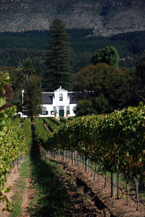 Buitenverwachting Vineyard, Constantia, Cape Town