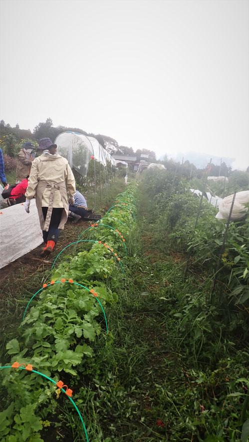相模原の里山で自然農を学ぶ体験農園@さとやま農学校・すどう農園