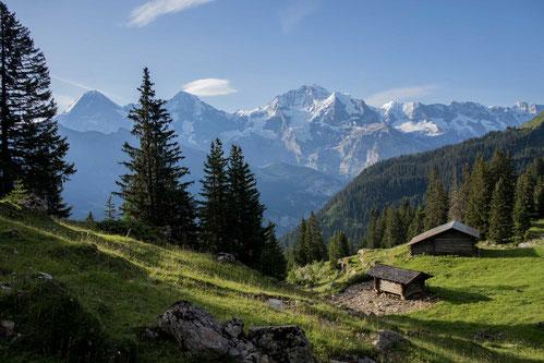 Chüebodmi Isenfluh Suhlawald Jungfrauregion Lauterbrunnental