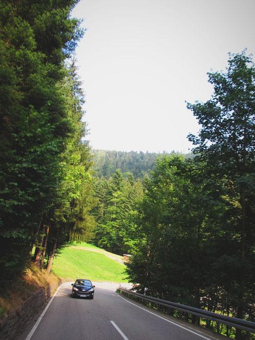 forêt noire route bigousteppes allemagne