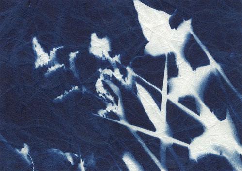 Löwenzahl auf einer Ackerwiese. Hintergund blau und der Löwenzahn mit den verschiedenen Gräser sind in weiss mit hellblauen Schattieren dargestellt.