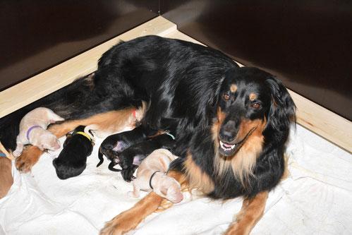 Abby hat die Geburt ihrer Rasselbande super gemeistert und ist eine fürsorgliche Mama. Die Kleinen haben alle schon gut zugenommen.